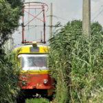 Zardzewiałym tramwajem przez bagno