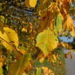 Jesienna chandra - jak z nią aktywnie walczyć i wygrać?