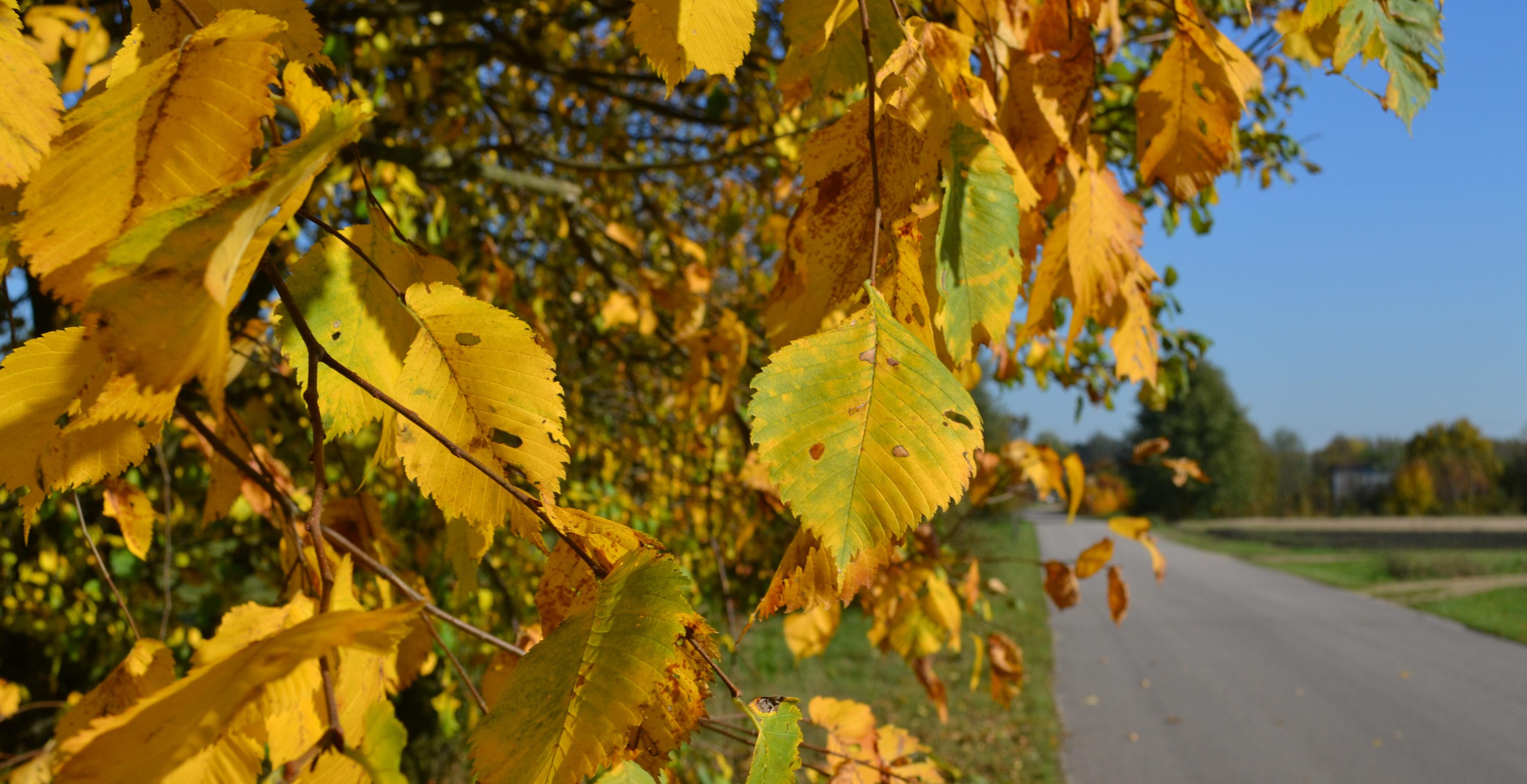 Jesienna chandra – jak z nią aktywnie walczyć i wygrać?
