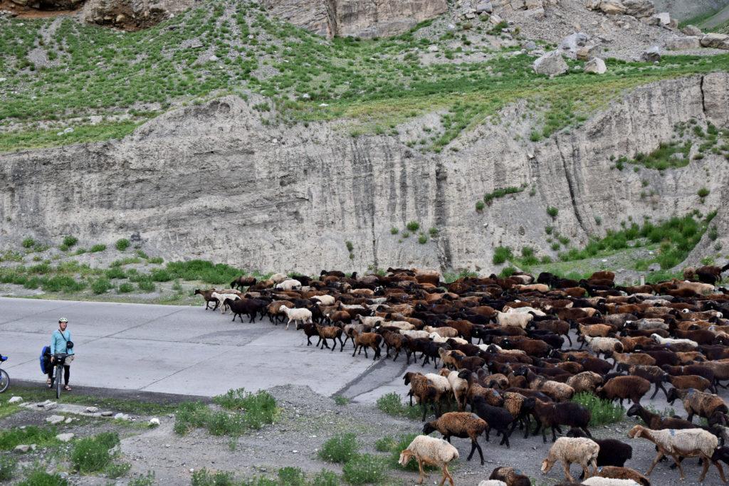 Kirgistan stado baranów