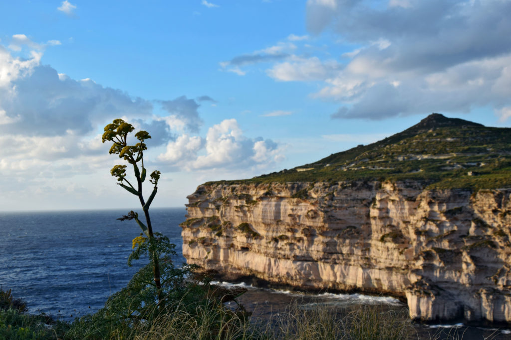 Malta, atrakcje, piękne miejsca. Klify Dingli