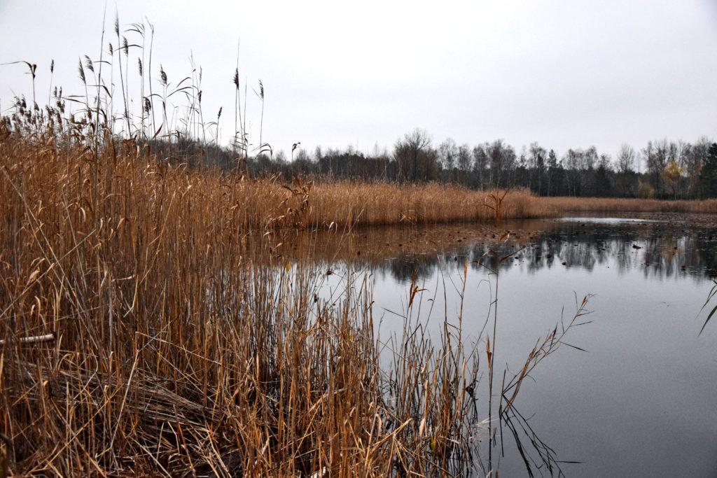 Warszawa, ciekawe miejsca. Jezioro Torfy, Mazowiecki Park Krajobrazowy.
