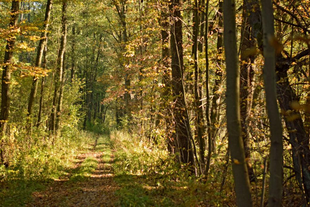 Kampinoski Park Narodowy, okolice Leszna.