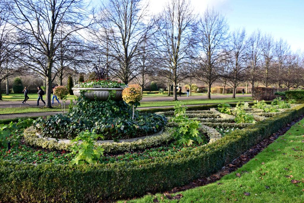 Regent's Park - choć jest środek zimy, starannie przystrzyżony żywopłot i całoroczne rośliny wyglądają kwitnąco. Codziennie nad ich wyglądem pracuje grupa miejskich ogrodników.