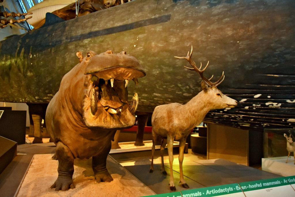 Muzeum Historii Naturalnej w Londynie - darmowe atrakcje.