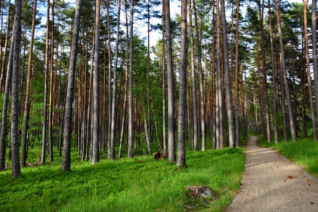 Drzewicz - Kaszubska Marszruta