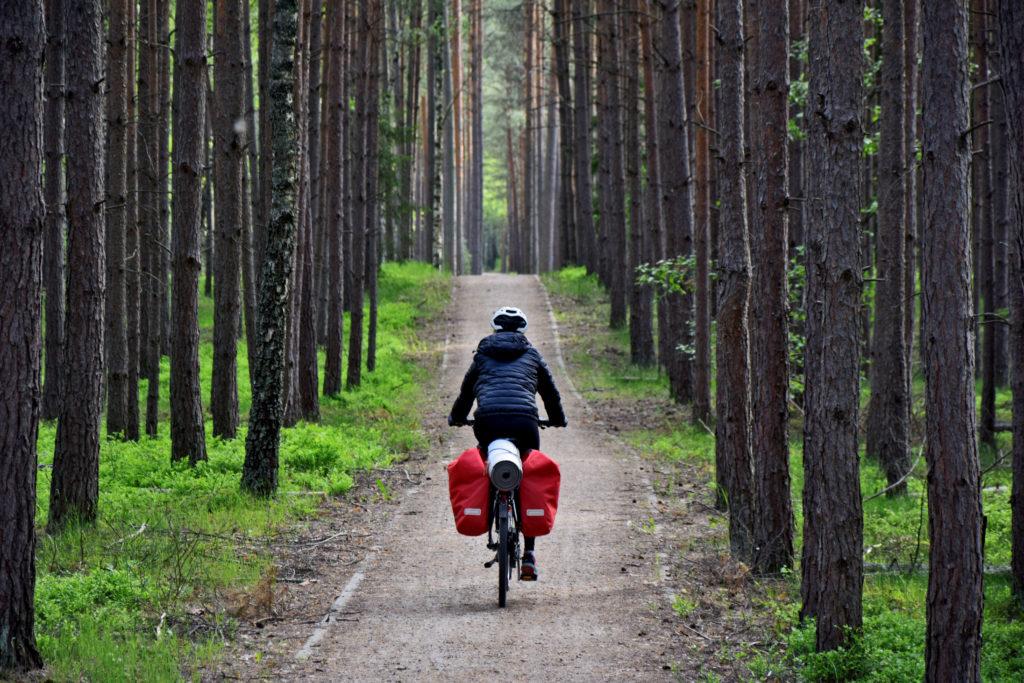 Kaszubska Marszruta - Pomiędzy drzewami w kierunku Parku Narodowego.