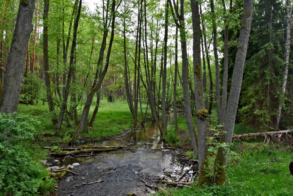Kaszubski Park NArodowy - Strugfa Siedmiu Jezior