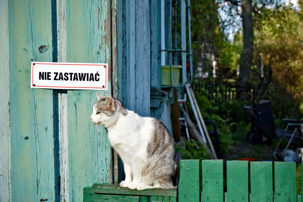 Os. Przyjaźń, Warszawa. foto: Dawid Białowąs (Gdzie Los Poniesie). Kot