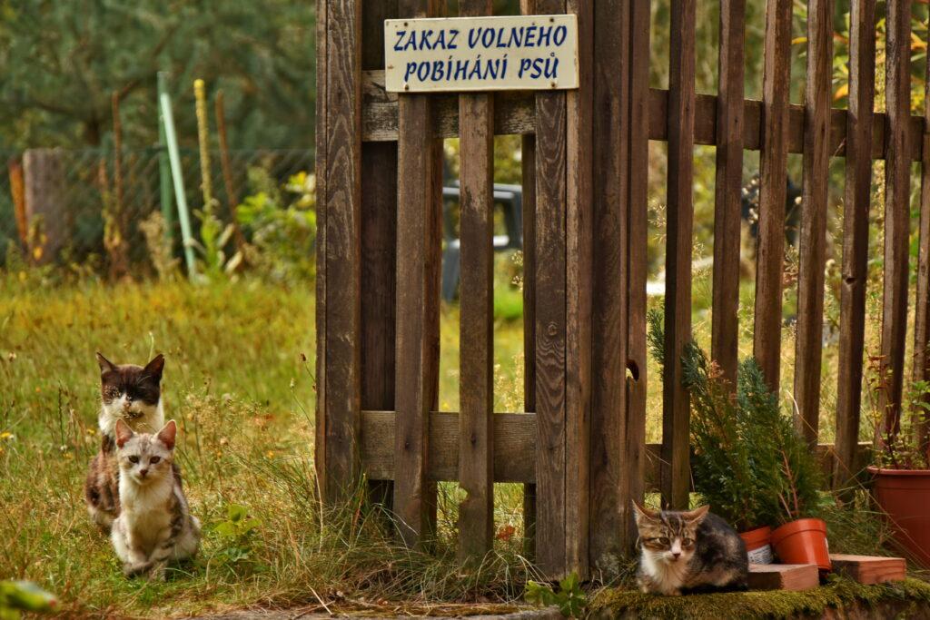 Czechy Czeska Szwajcaria koty