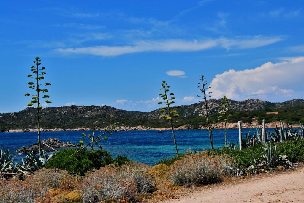 Caprera plaża, agawy widok spiaggia