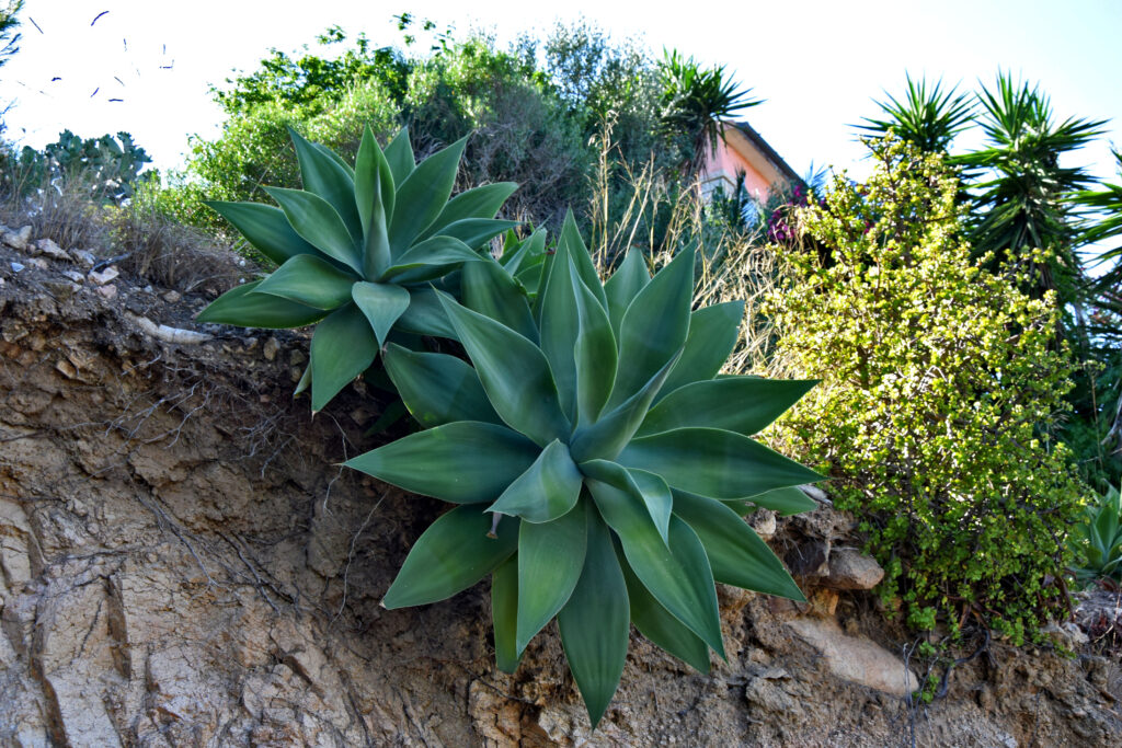 La Maddalena roślinność