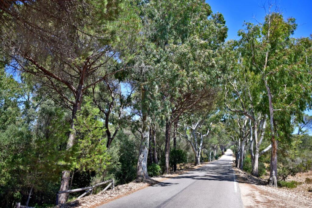 Caprera roślinność, drzewa, La Maddalena