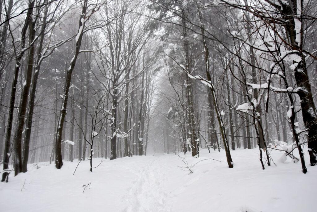 Magurski Park Narodowy - szlak Wysokie Ożenna.
