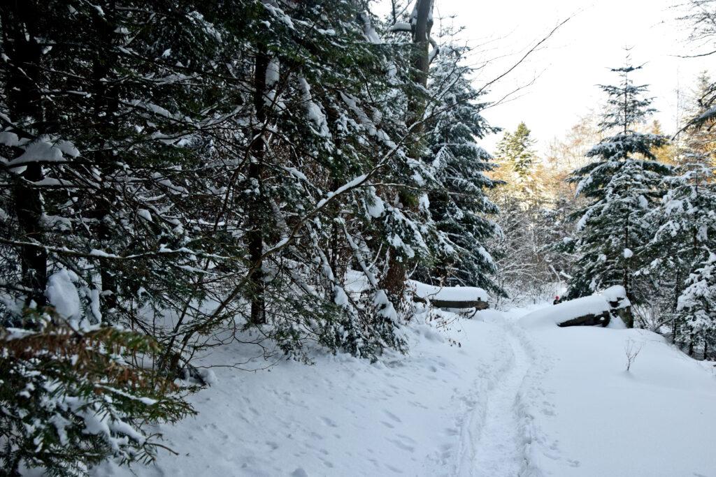 Magurski Park Narodowy szlaki piesze zimą