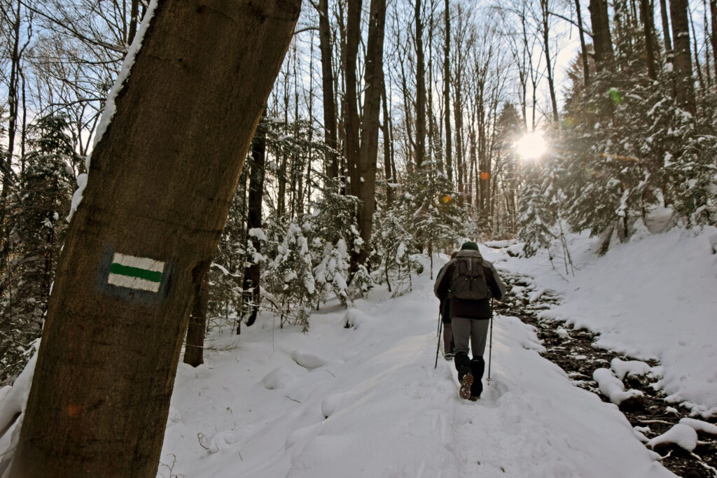 Magurski Park Narodowy Folusz, szlak na Magurę.